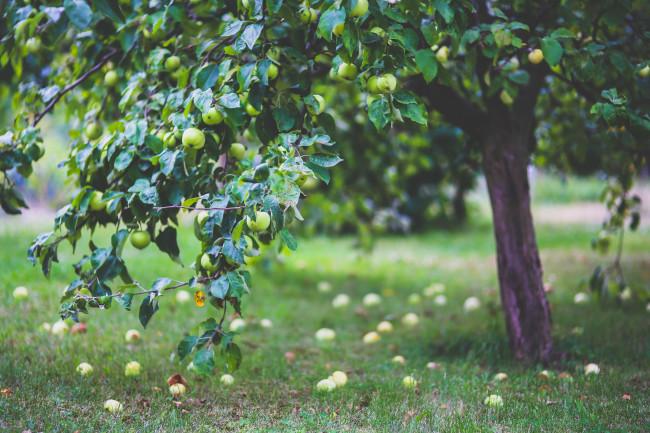 Как создать прибыльную пермакультурную ферму