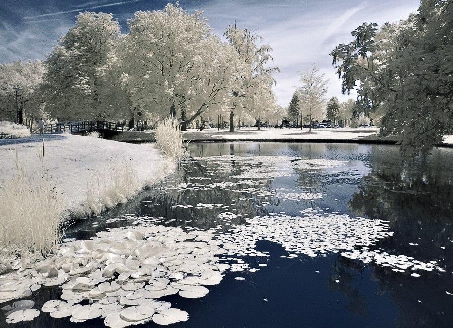 Глубина пруда для зимовки рыбы