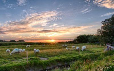Регенеративное сельское хозяйство. Что это такое?