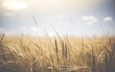 Управление влажностью почвы